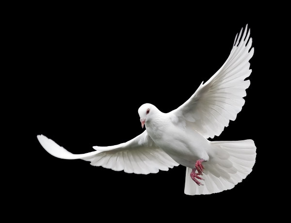 in der eigenen Geschichte ankommen Taube